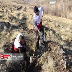 کاشت 100 هزار اصله نهال در عرصههای منابع طبیعی استان همدان