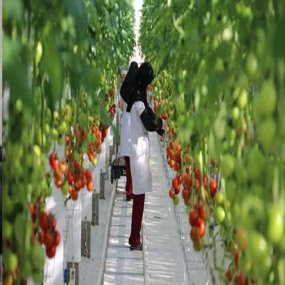 Export and Production Booming in Lorestan Safa Fajr Agro Industries and Tourism Co
