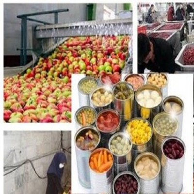 The Operation of the Biggest Plant Processing Horticultural and Garden Crops in Marivan